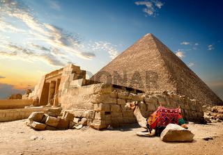 Camel near ruins