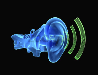 3D ear anatomy with sound