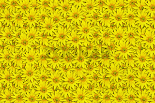 background of yellow flowers Ficaria verna Huds close up