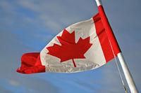 Kanada Flagge, rotes Ahornblatt vor weissem Hintergrund
