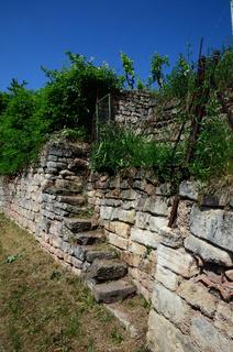 Weinbergmauer im Neckartal