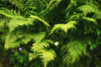 Green fern background