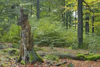 Abgestorbener Baum, Deutschland