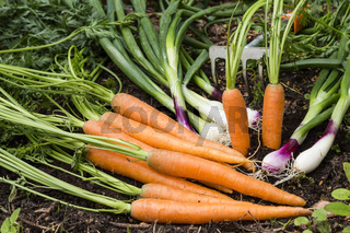 Gemüsebeet, vegetable patch