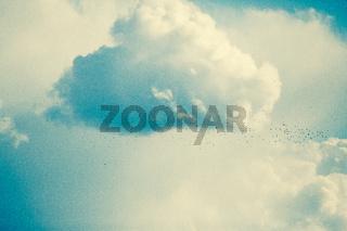 swarm of birds in cloudy landscape