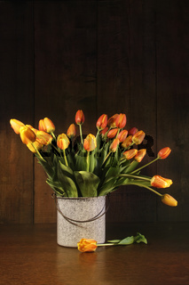 Tulips in old bucket