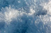 Eiskristalle Nest