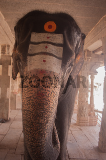 Grey elephant at virupaksha temple in Hampi