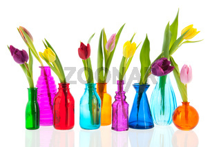 Colorful tulips in glass vases