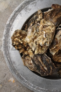 fresh closed oysters