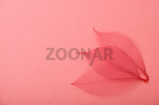 Three red skeleton leaves on pink paper