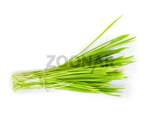 filling bright green grass isolated