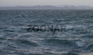 Kara sea near the island of Novaya Zemlya