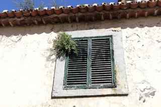 Geschlossenes zugewachsenes Fenster in der Altstadt von Funchal