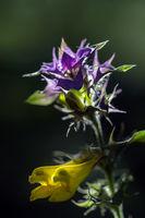 Nesselblüte im Wald / Südliches Burgenland