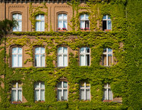 building facade covered with plants - house overgrown with ivy