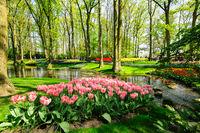 Flower beds of Keukenhof Gardens in Lisse, Netherlands