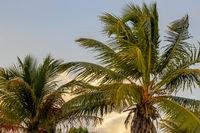 Palm Trees On A Beautiful Tropical Island At Dusk