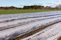 Ground with plastic protecting strips for plant in field, early spring, april, in Norway.