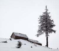 Old wooden hut and frozen pine in winter mountains with gray fog sky
