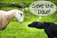 Dog Meets Sheep, Text Save The Date