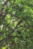 Tree branches and rich green foliage background
