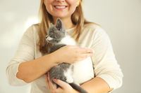 Cute grey and white kitten sitting on the hands of the woman