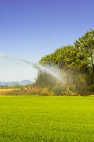 Sprinkler irrigation system in operation