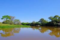 Densely forested shores of the Cuiaba river in the brazilian Pantanal, Porto Jofre, Mato Grosso Do Sul, Brazil