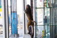Monkey explores the window space