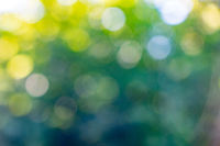 Bokeh background. Blurred yellow green abstract layout with white bokeh circles