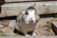 New born rabbit or cute bunny on sand in a garden, cute pet