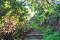 Hiking in the woods of the island of La Gomera
