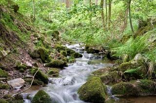 Gebirgsbach im Thüringer Wald