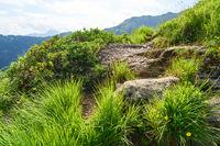 Gras und Pflanzen auf Berg in den Alpen