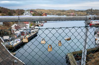 Rovaer, Haugesund in Norway, January 11, 2018: A few padlocks hanging on the mesh fencing at the bridge. Rovaer archipelago in Haugesund, Norway. This bridge connects the two islands Rovar and Urd.