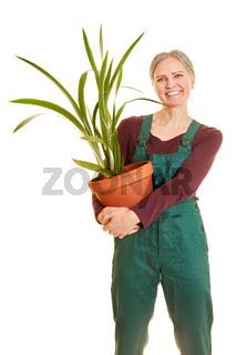 Floristin mit Topfpflanze in Latzhose