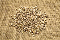 hemp seed pile