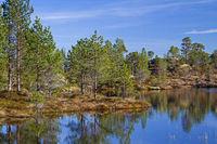 Moorweiher im Trondelag