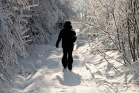 silhouette traveller in fractal snow-covered forest