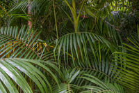 Tropical palm leaves, green rainforest background