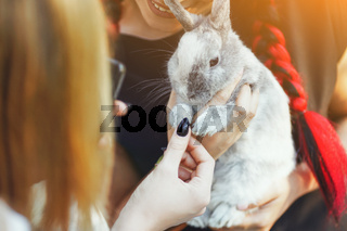 Close-Up Gray Bunny on Hand of Dark-Haired Smiling Woman