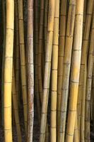 Brauner Bambus