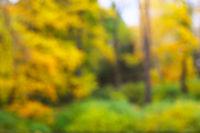 Autumn park scenery defocused