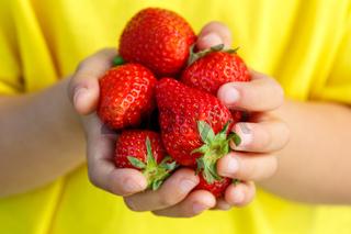 Erdbeeren Früchte Beeren Erdbeere Frucht Beere Sommer halten Hände Kind kleiner Junge