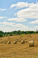 Feld mit Getreide bei der Ernte im Sommer