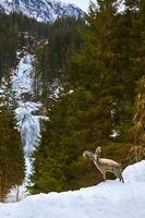 Waterfall Krimml - Tirol Austria