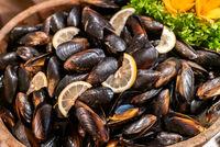 Black Mussel seafood on ice
