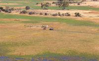 Elephants crossing water in the Okavango delta (Botswana)