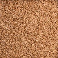 Organic peeled oats texture